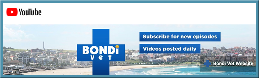 Bondi Vet - videos on YouTube